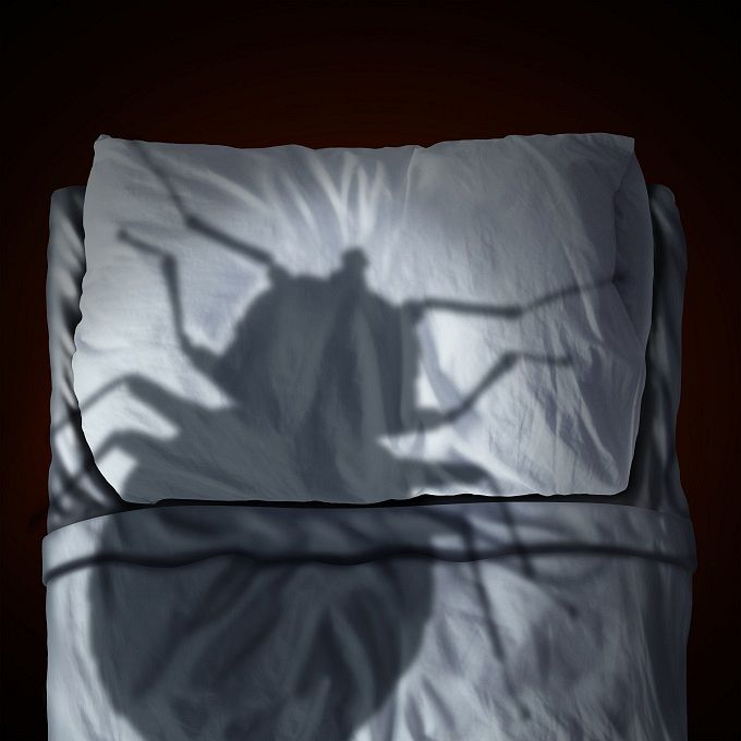 The worldwide war on bed bugs